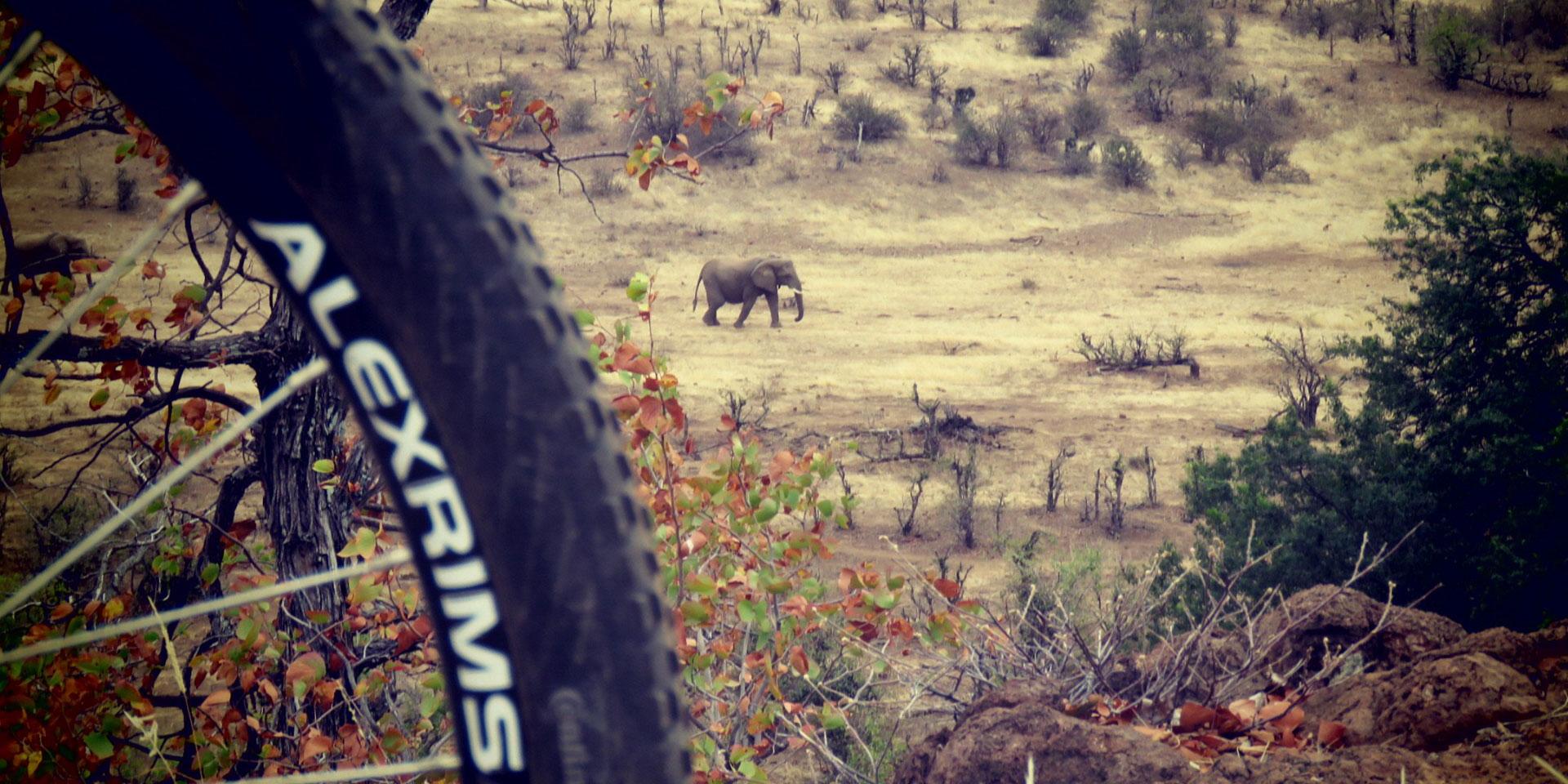 wild-bike