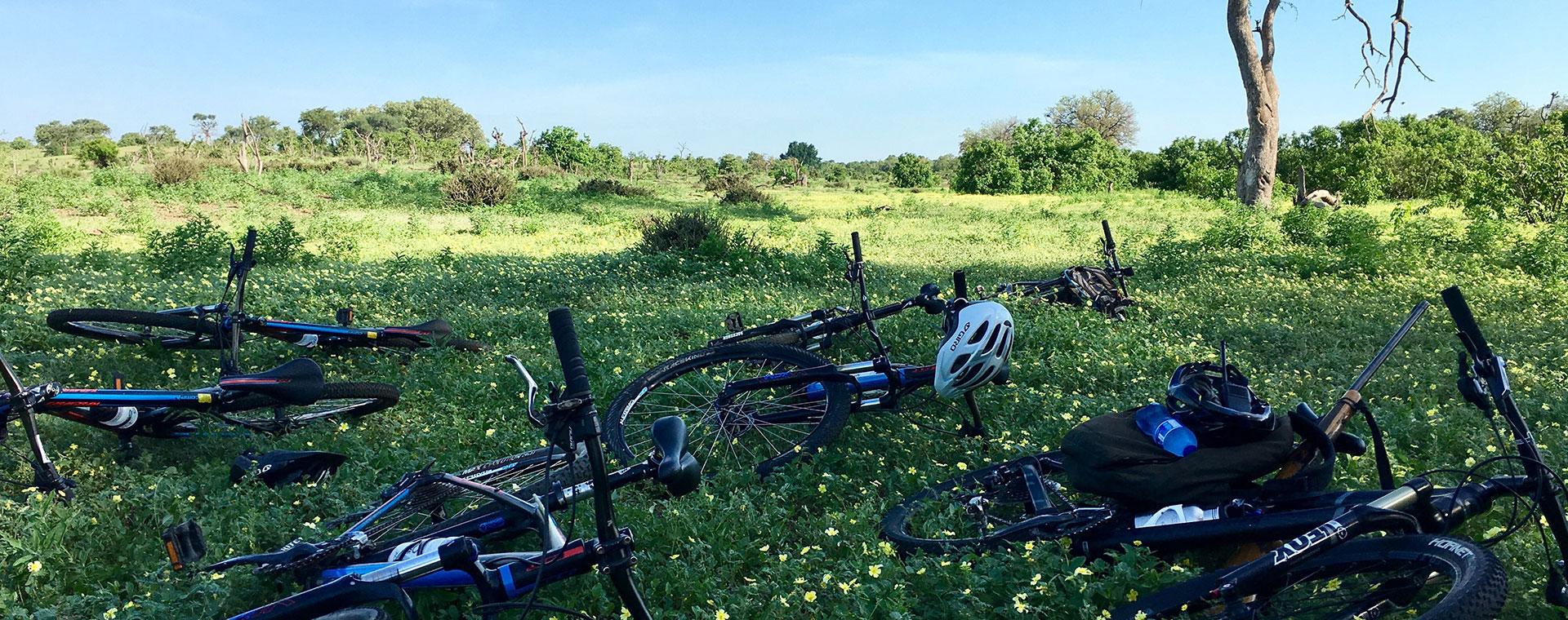 wild-bikes